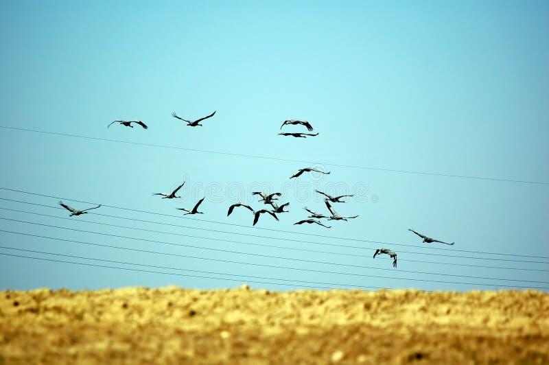Uccelli che volano via fotografia stock