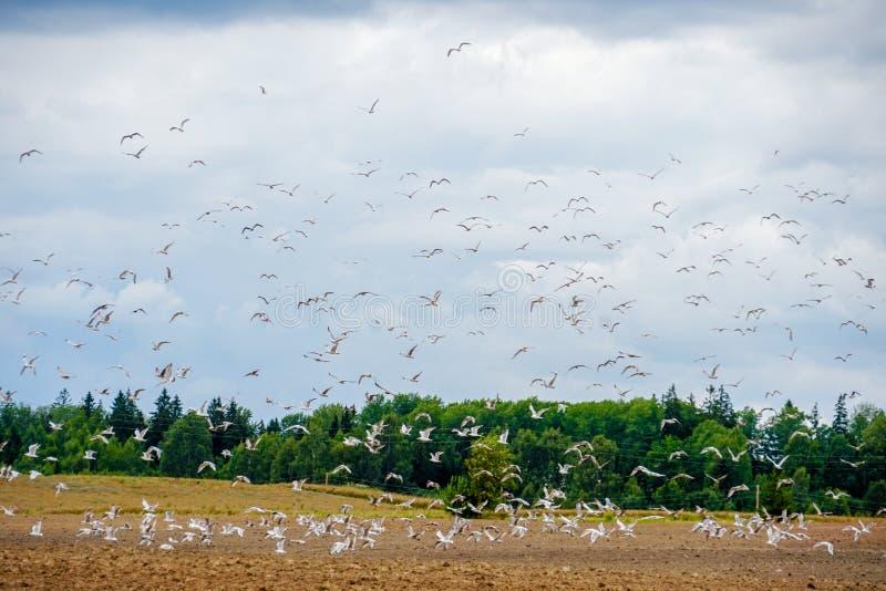Uccelli che volano via fotografia stock libera da diritti