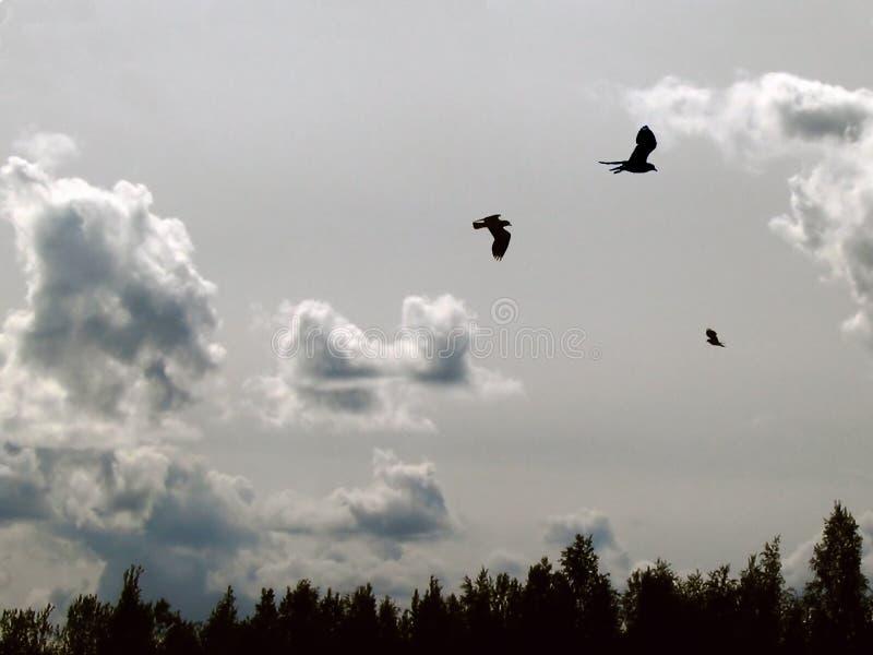 uccelli in cielo fotografia stock