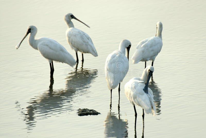 Uccelli del gruppo fotografia stock libera da diritti