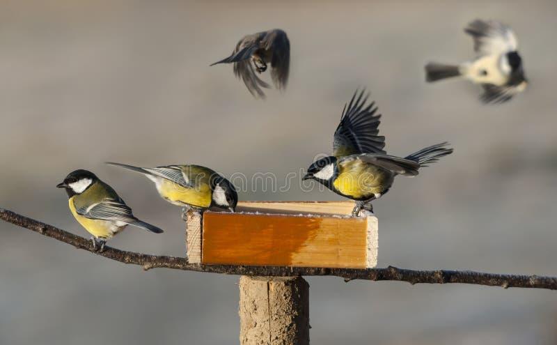 Uccelli del Titmouse fotografie stock