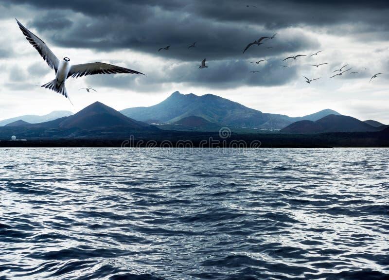 Uccelli dell'oceano fotografia stock