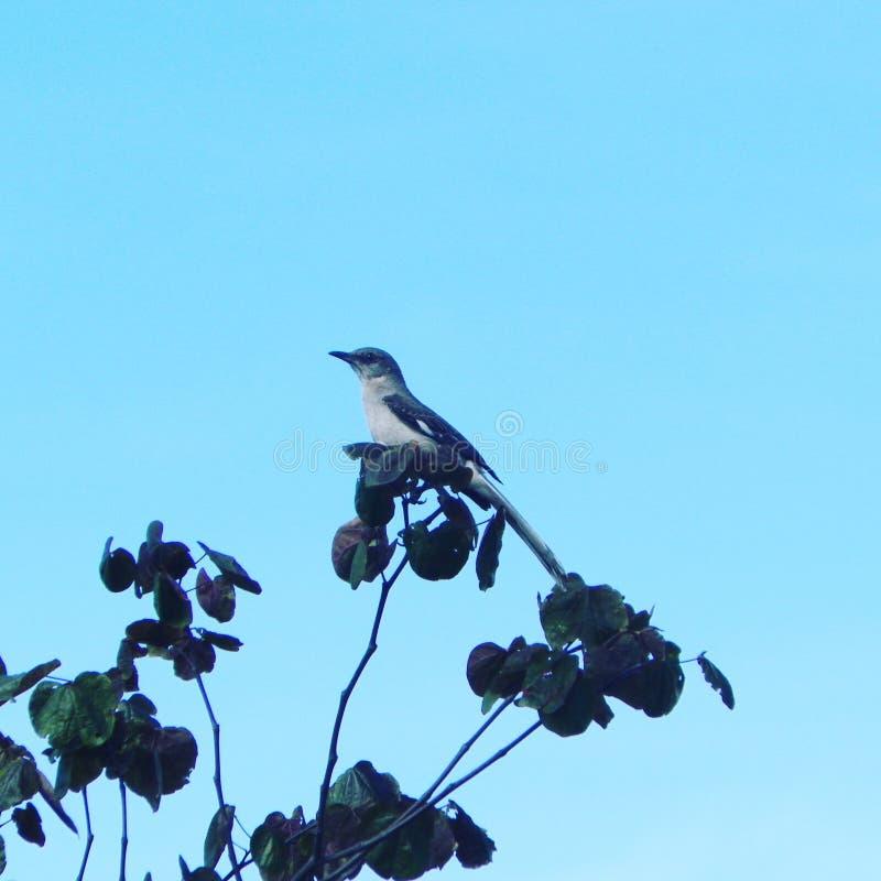 Uccelli dell'uccello birdy in blu fotografie stock