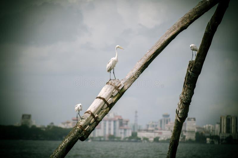 Uccelli della spiaggia fotografia stock