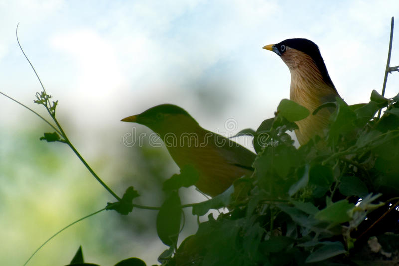 uccelli delle coppie fotografia stock libera da diritti