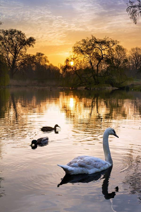 Uccelli di alba di Vondelpark fotografie stock