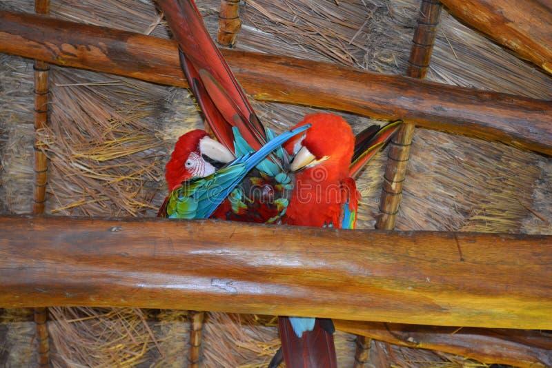 Uccelli di amore e un albero immagine stock libera da diritti