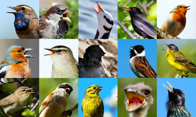 Uccelli di canto. fotografie stock libere da diritti