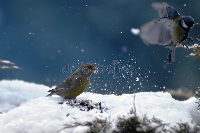 Download Uccelli di inverno fotografia stock. Immagine di bianco - 3133218