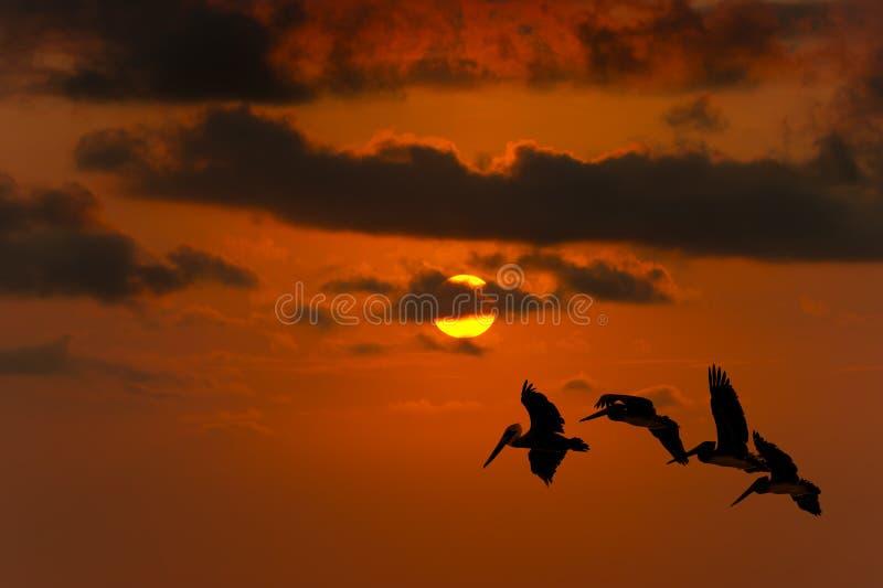 Download Uccelli Di Libertà Che Pilotano Siluetta Di Speranza Fotografia Stock - Immagine di bello, background: 55354780