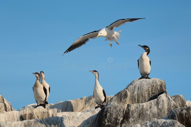 Uccelli di mare al sole fotografie stock libere da diritti