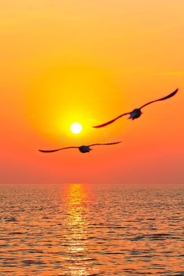 Uccelli di volo con sunset2 immagine stock
