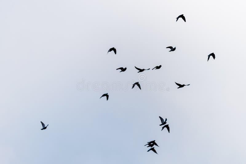 Uccelli di volo sul cielo fotografia stock