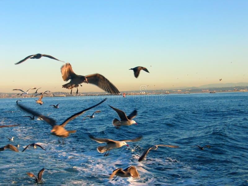 Uccelli dietro una barca fotografie stock libere da diritti