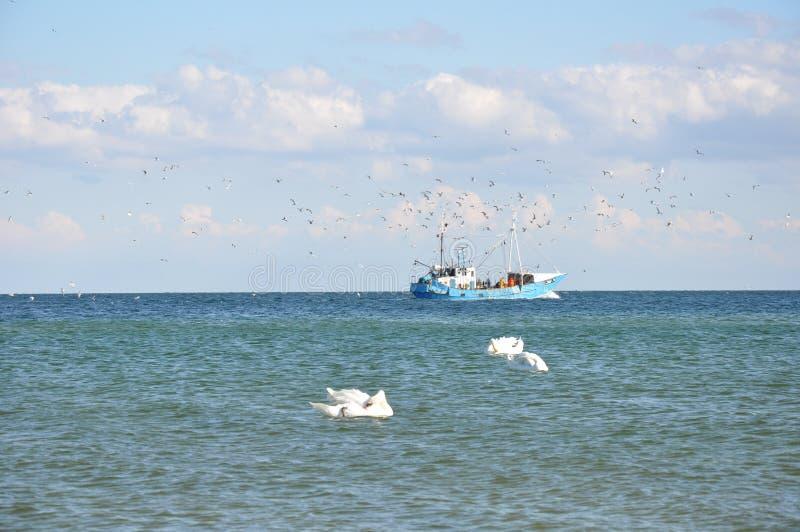 Uccelli e barca fotografie stock libere da diritti