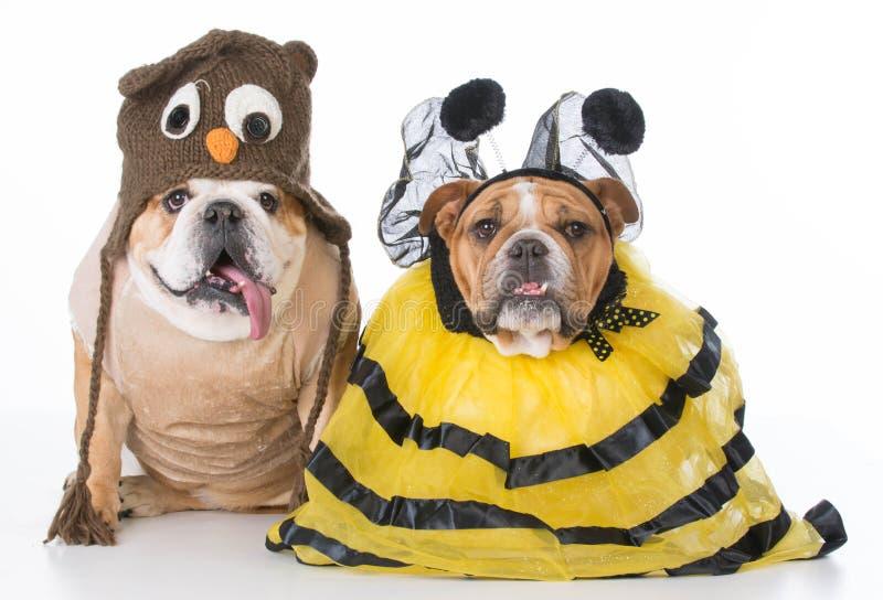 Uccelli e le api immagini stock