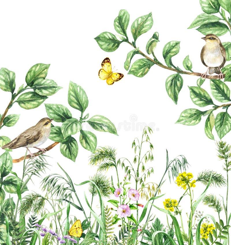 Uccelli e Wildflowers dell'acquerello illustrazione di stock