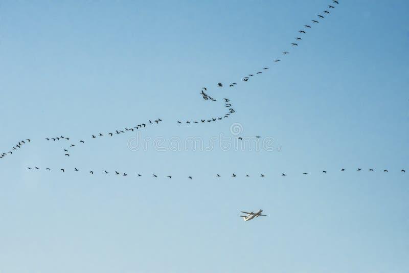 Uccelli ed aereo di migrazione fotografie stock libere da diritti