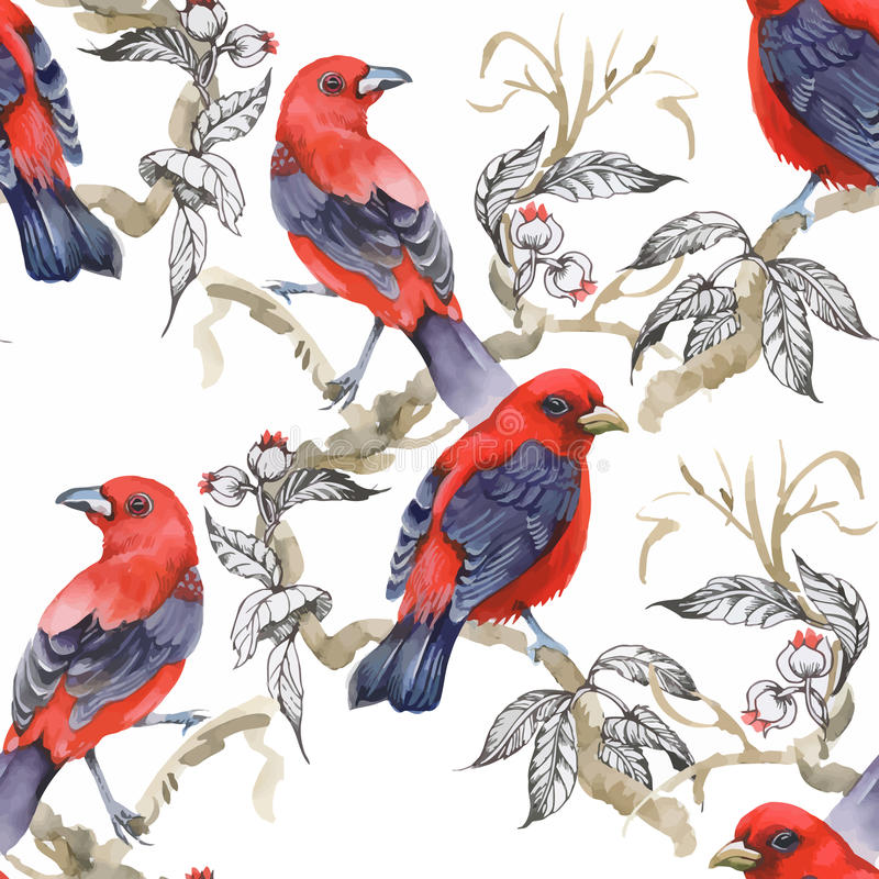 Uccelli esotici selvaggi dell'acquerello sul modello senza cuciture dei fiori su fondo bianco illustrazione di stock