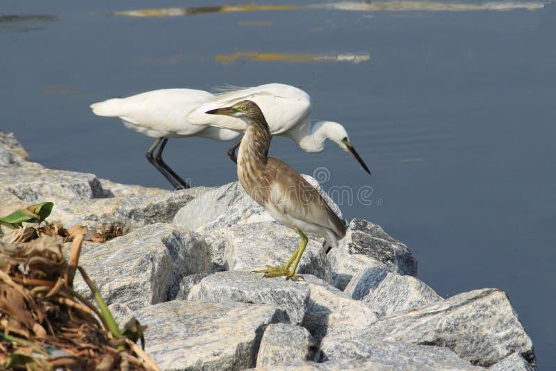Uccelli a facilità ed a calma fotografie stock libere da diritti