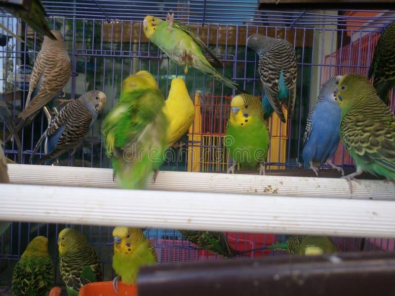 Uccelli in gabbia fotografie stock libere da diritti