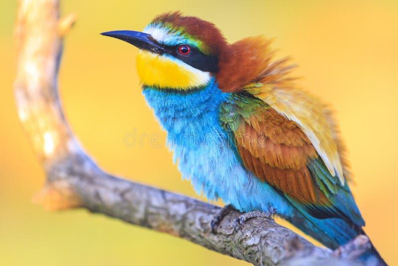 Uccelli incredibilmente bei ad alba immagine stock libera da diritti