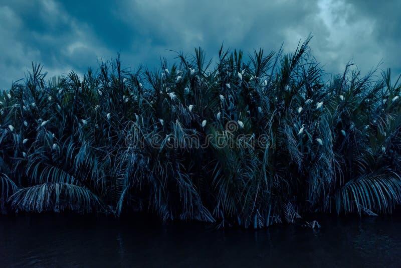 Uccelli in laguna alla notte vicino a Tangalle, Sri Lanka immagine stock