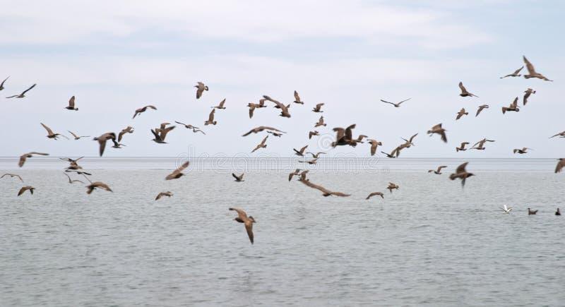 Uccelli marini fotografia stock