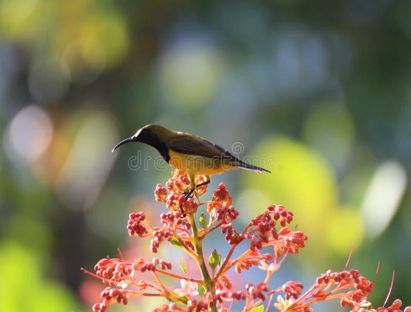 Uccelli nei bei fiori del giardino fotografia stock libera da diritti