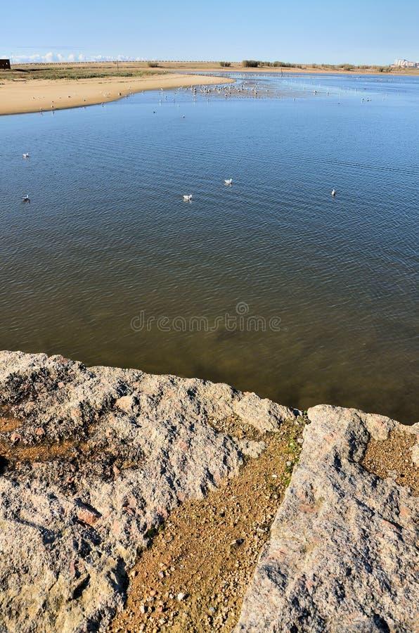 Uccelli nei riverbanks fotografia stock