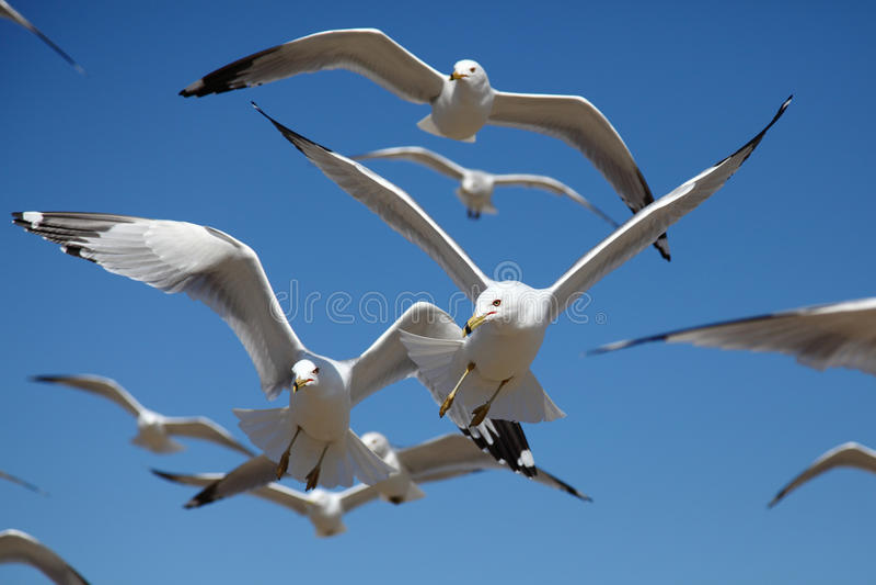 Uccelli nel movimento immagine stock libera da diritti