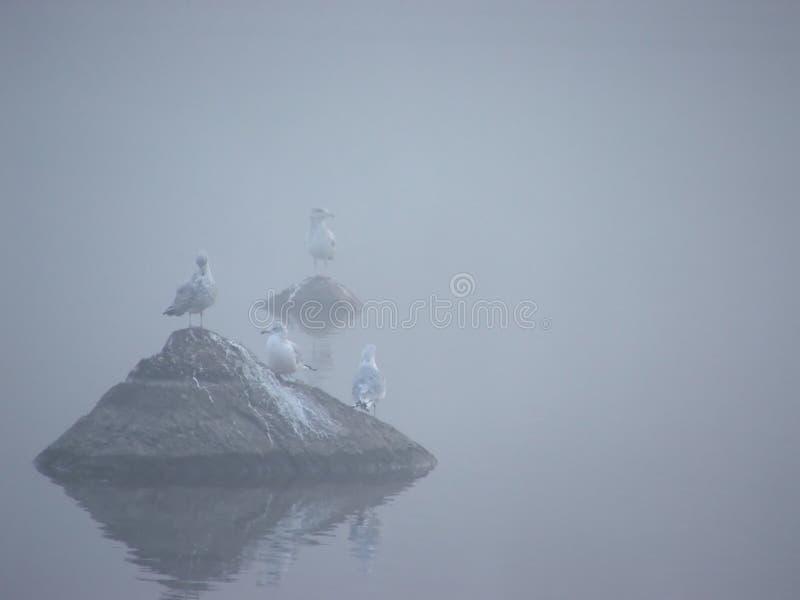 Uccelli nella foschia I fotografie stock libere da diritti
