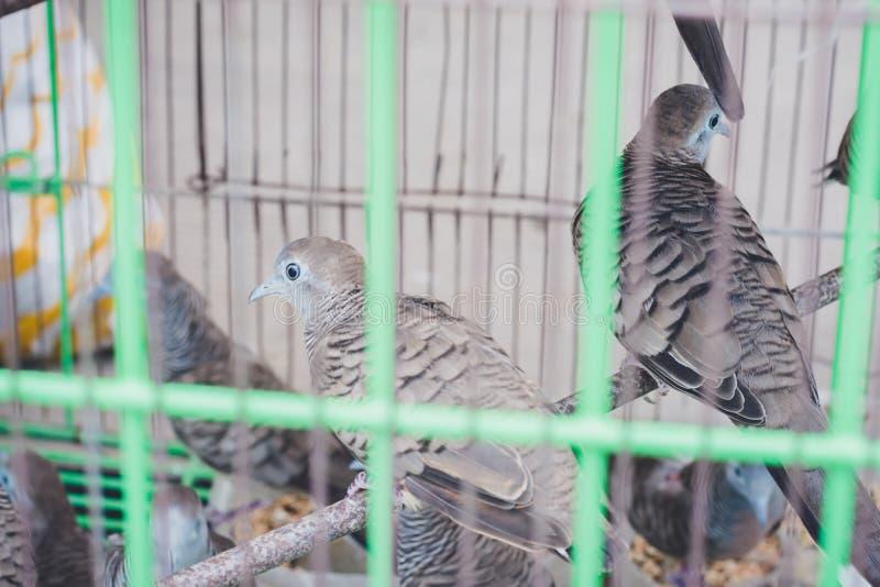 Uccelli nella gente aspettante della gabbia che libera, per fare merito, relig immagini stock