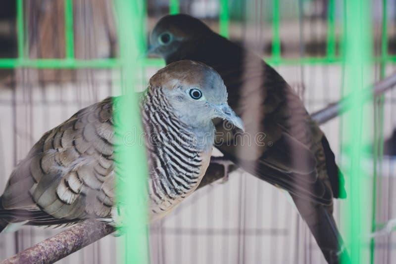 Uccelli nella gente aspettante della gabbia che libera, per fare merito, relig immagine stock