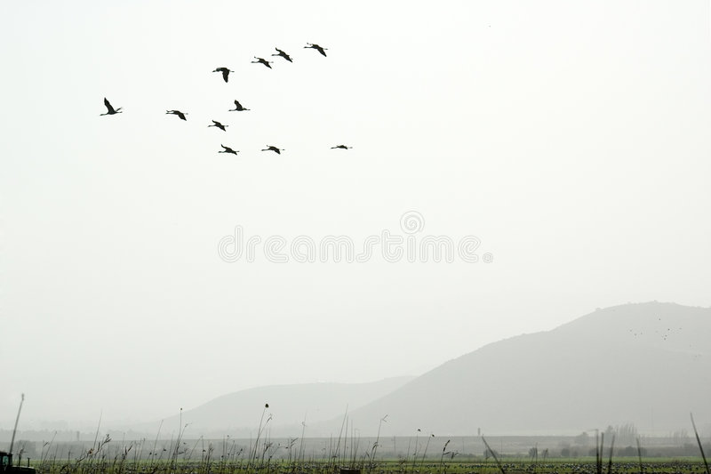 Uccelli nella nebbia immagine stock libera da diritti