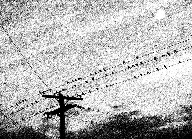 Uccelli in perchia fotografia stock