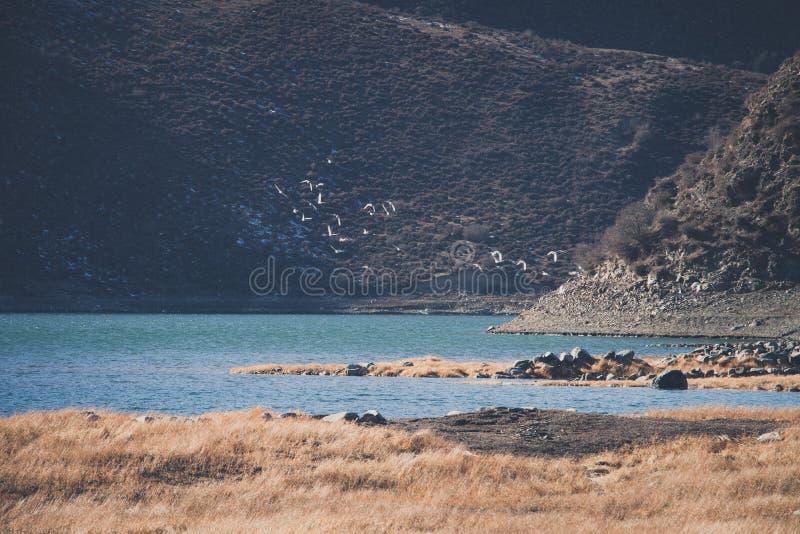 Uccelli selvaggi che volano liberamente nel bacino idrico di Heiquan fotografia stock libera da diritti
