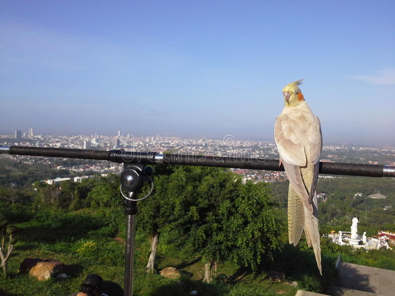 Uccelli sopra la collina in Hadyai, Songkhla, Tailandia fotografia stock libera da diritti
