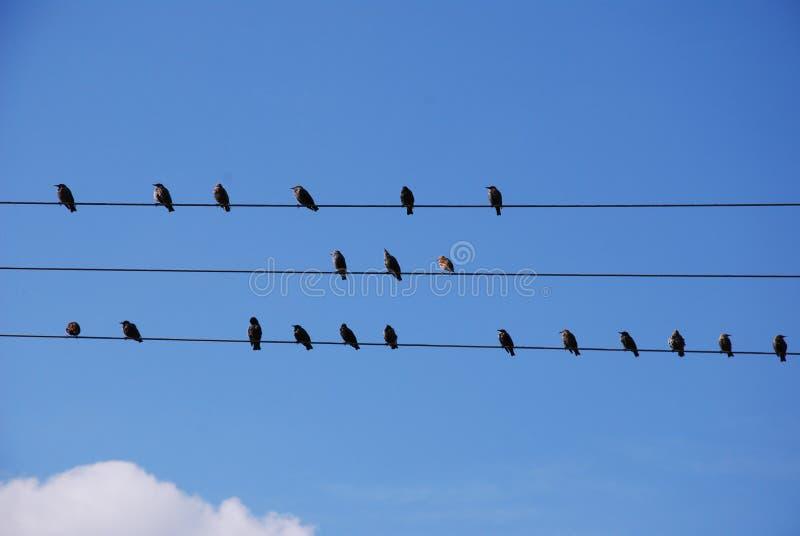 Uccelli su collegare immagine stock