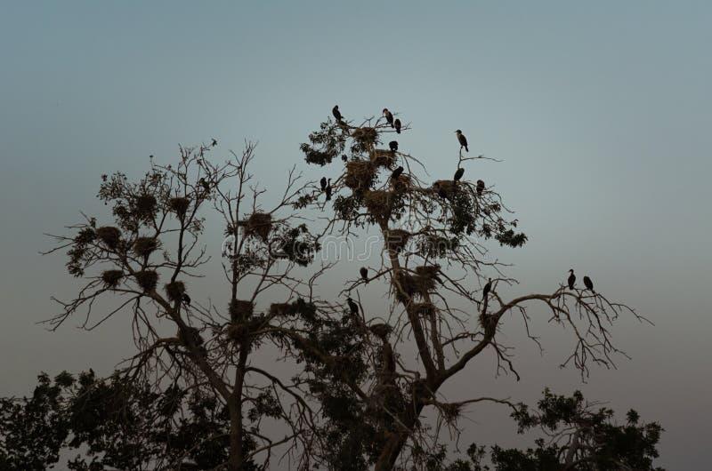 Uccelli su un albero fotografie stock