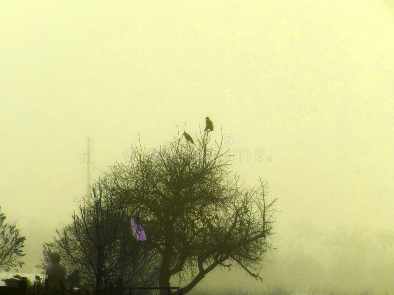 Uccelli su un albero in una mattina molto nebbiosa immagini stock libere da diritti