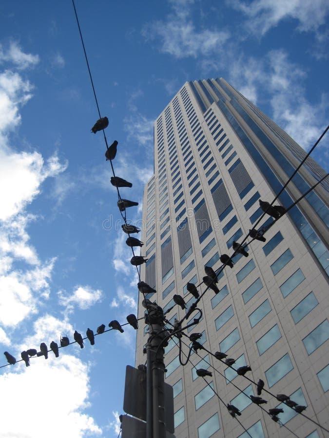Uccelli su un cavo immagini stock