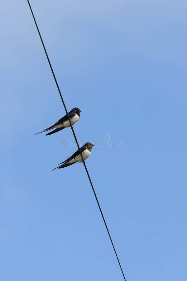 Uccelli su un collegare immagini stock libere da diritti