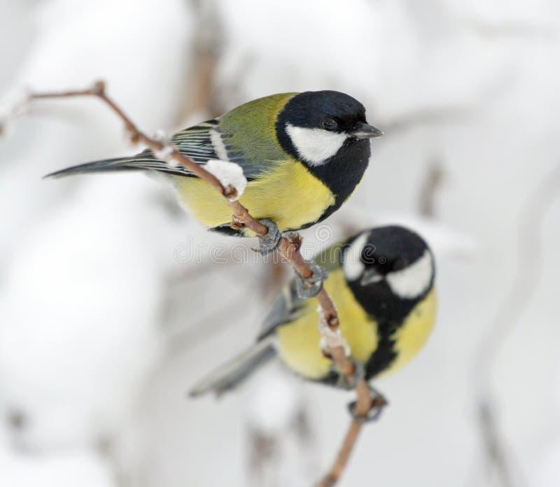 Uccelli su una filiale fotografie stock