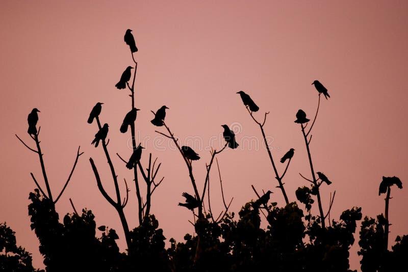 Uccelli sui cespugli fotografia stock libera da diritti