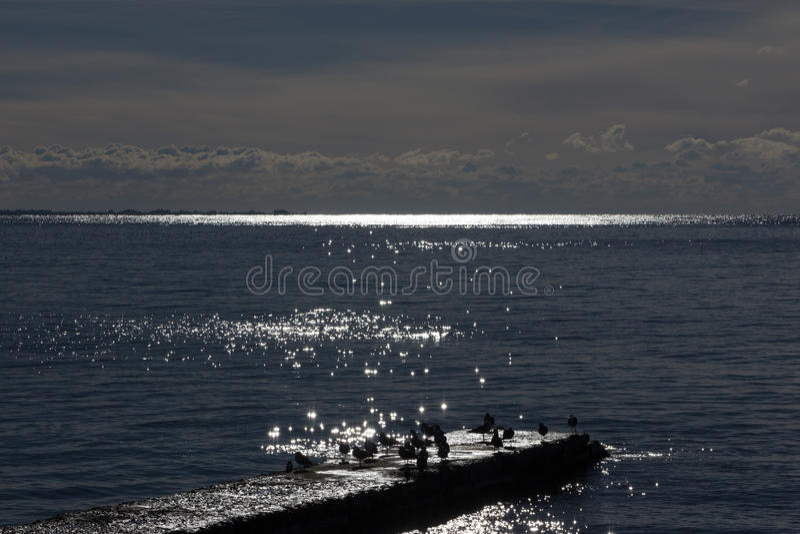 Uccelli sul frangiflutti fotografia stock
