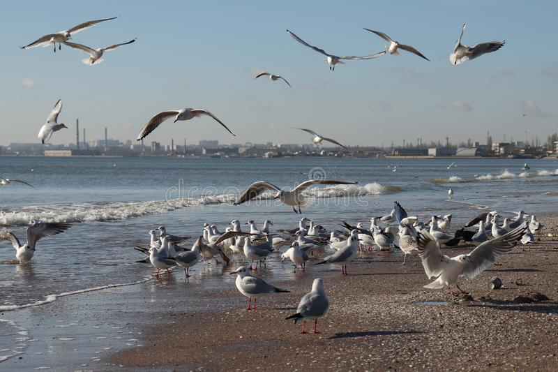 Uccelli sul mare fotografie stock