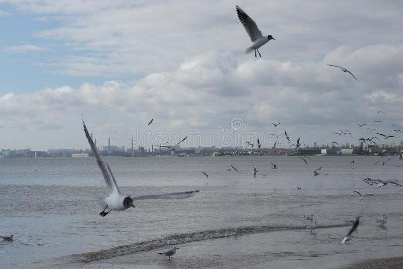 Uccelli sul mare immagine stock libera da diritti