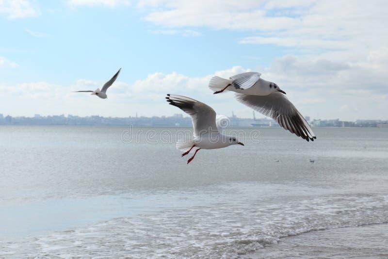 Uccelli sul mare immagini stock