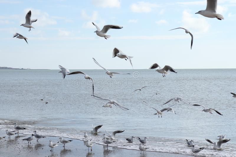 Uccelli sul mare fotografia stock libera da diritti
